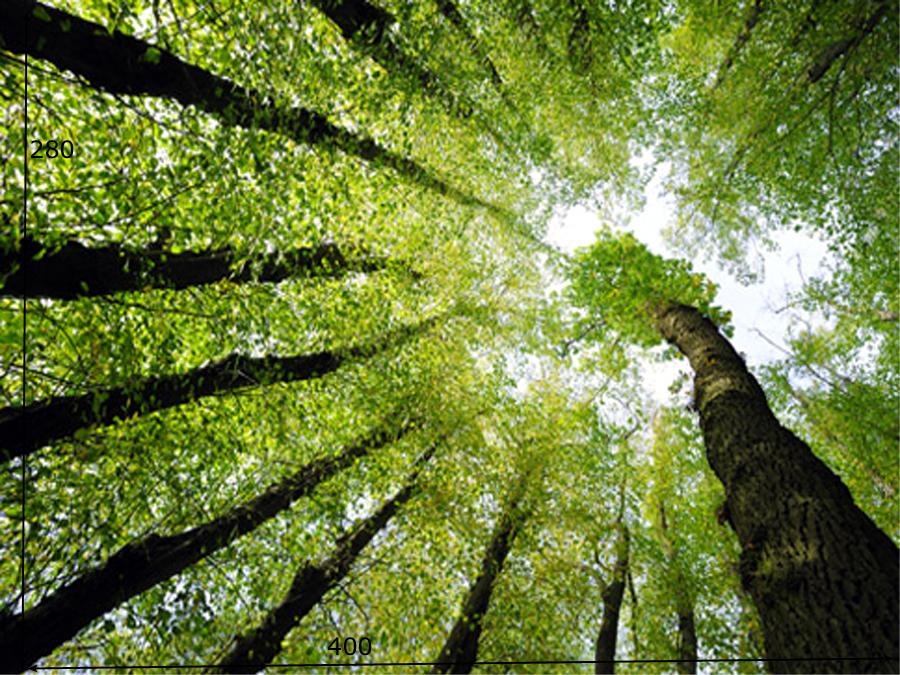 Fototapeet FOREST DREAMS