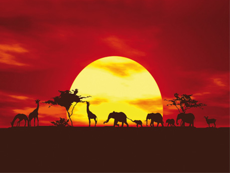 Fototapeet AFRICAN CARAVAN