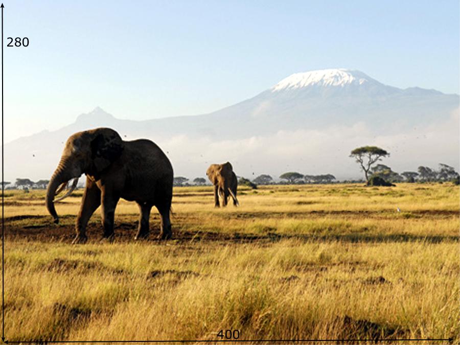 Fototapeet KILIMANJARO ELEPHANTS