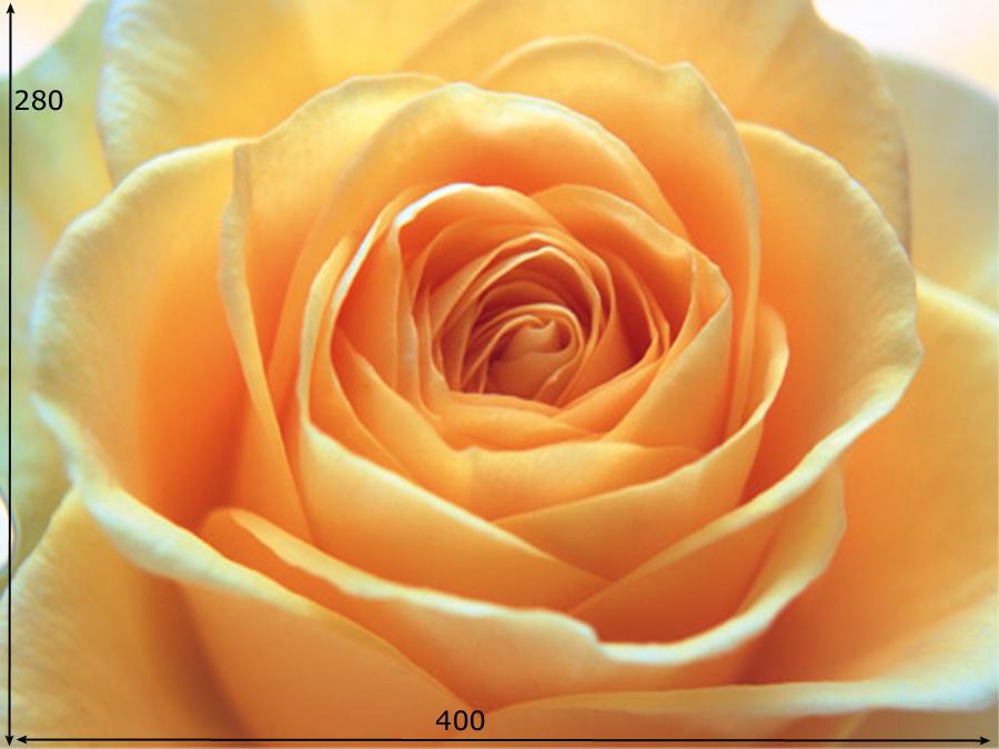 Fototapeet THE ORANGE ROSE