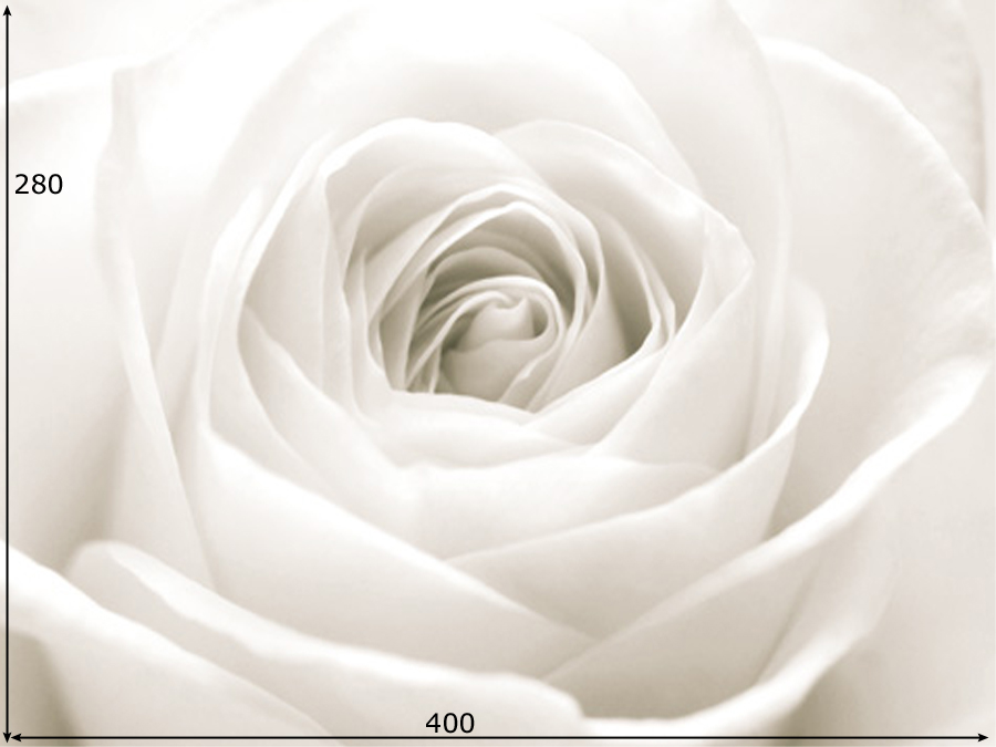 Fototapeet THE WHITE ROSE