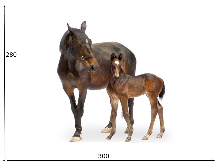 Fototapeet TRAKEHNER HORSES