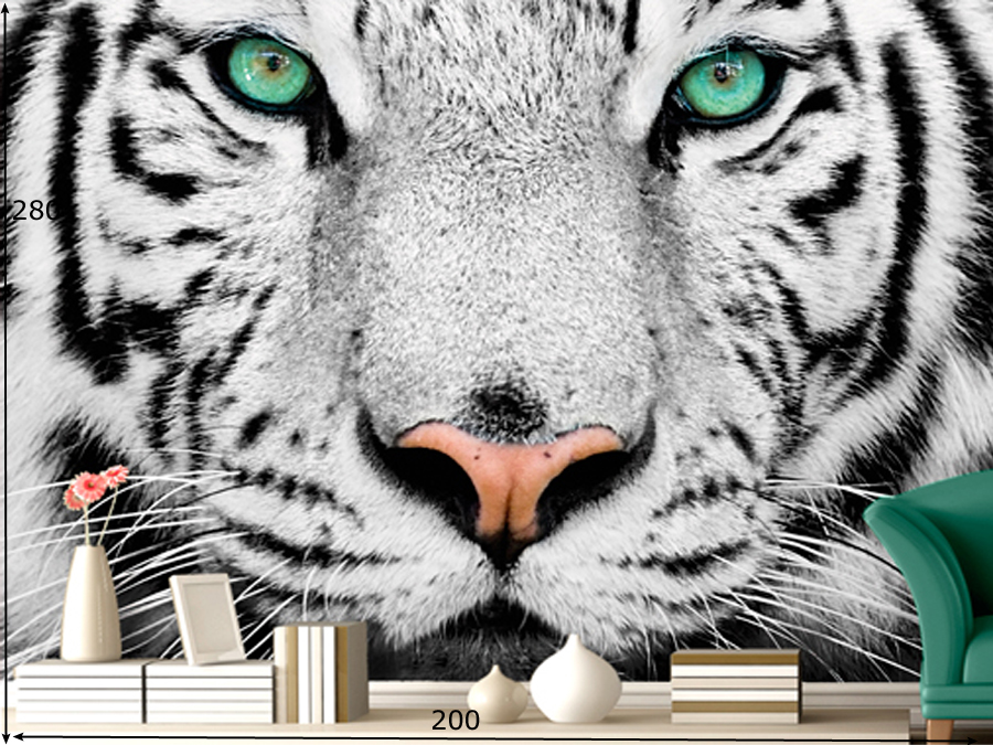 Fototapeet WHITE TIGER
