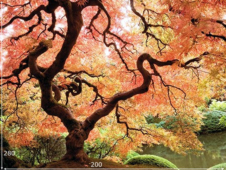 Fototapeet JAPANESE GARDEN