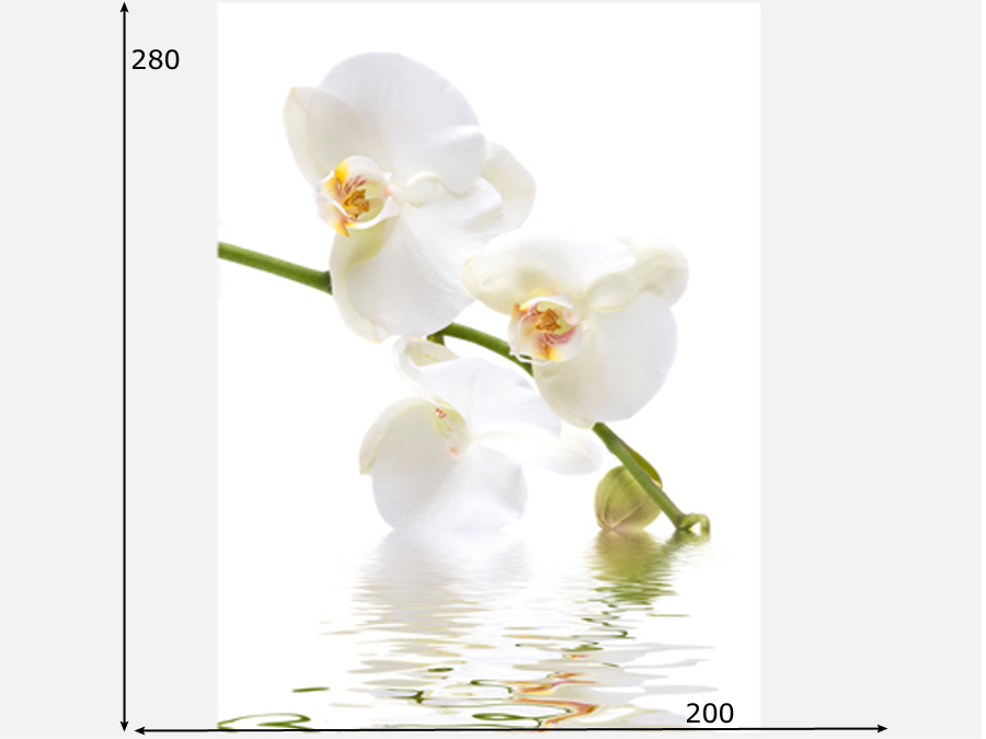Fototapeet ORCHID WATERS
