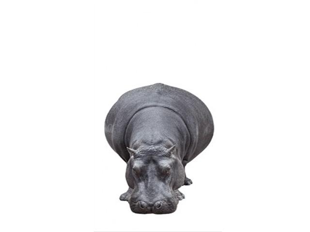 Uksetapeet BIG HIPPO
